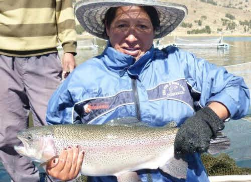 exportacion trucha peru acuicultura