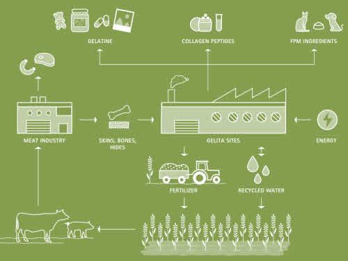 sustentabilidad Gelita